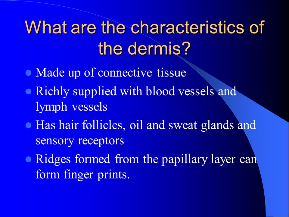 What are the characteristics of the dermis