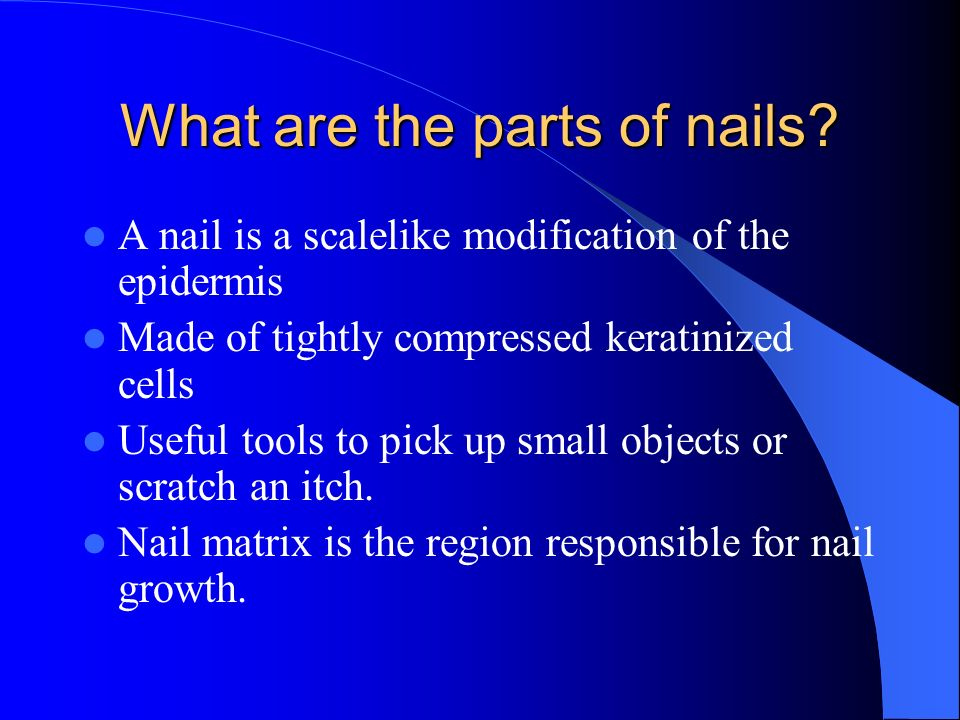 What are the parts of nails