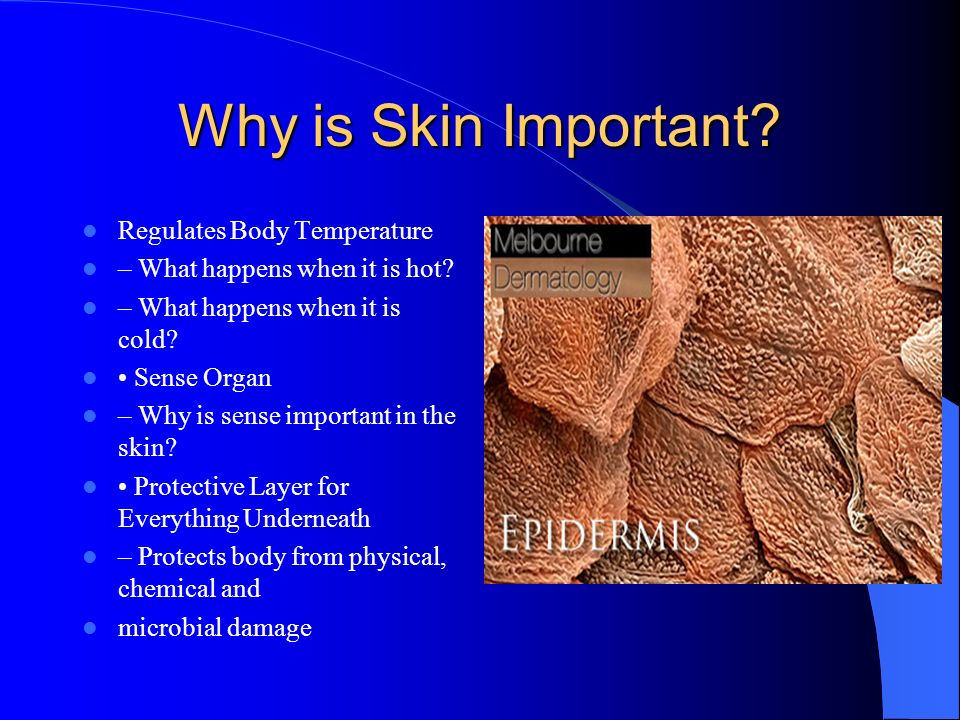 Why is Skin Important Regulates Body Temperature