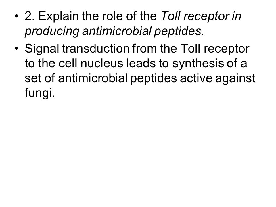 2. Explain the role of the Toll receptor in producing antimicrobial peptides.