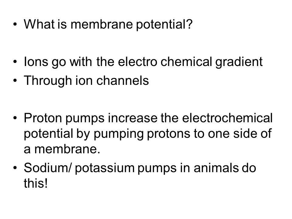 What is membrane potential