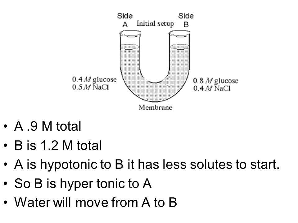 A .9 M totalB is 1.2 M total. A is hypotonic to B it has less solutes to start. So B is hyper tonic to A.
