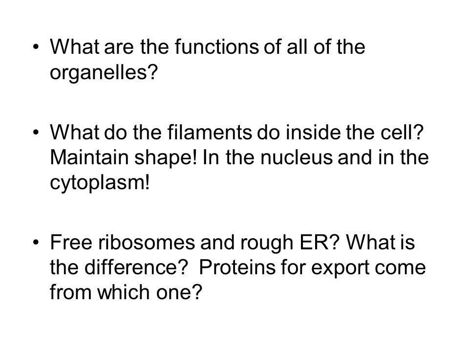 What are the functions of all of the organelles