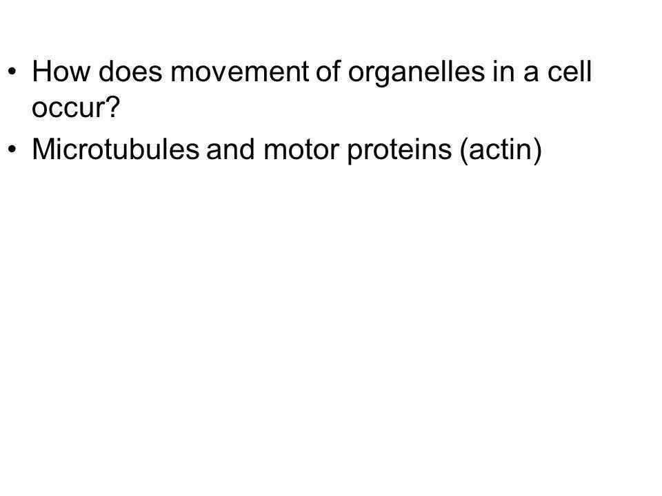 How does movement of organelles in a cell occur