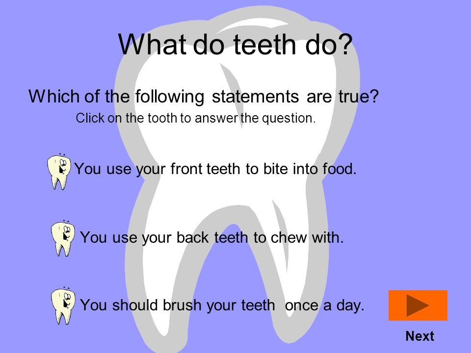 What do teeth do Which of the following statements are true