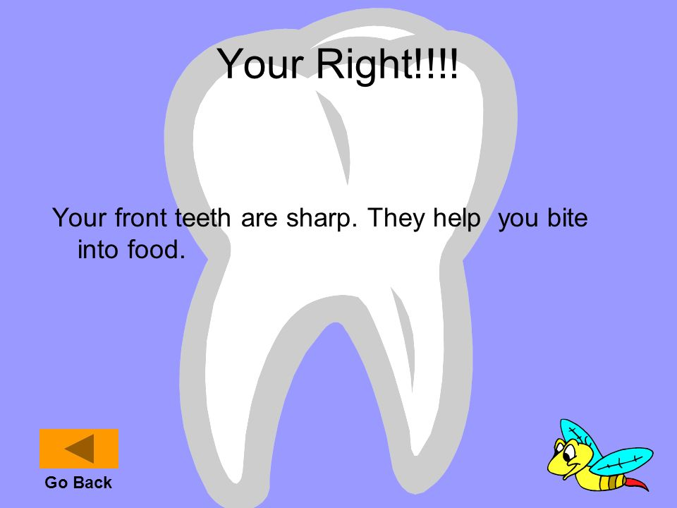 Your Right!!!! Your front teeth are sharp. They help you bite into food. Go Back