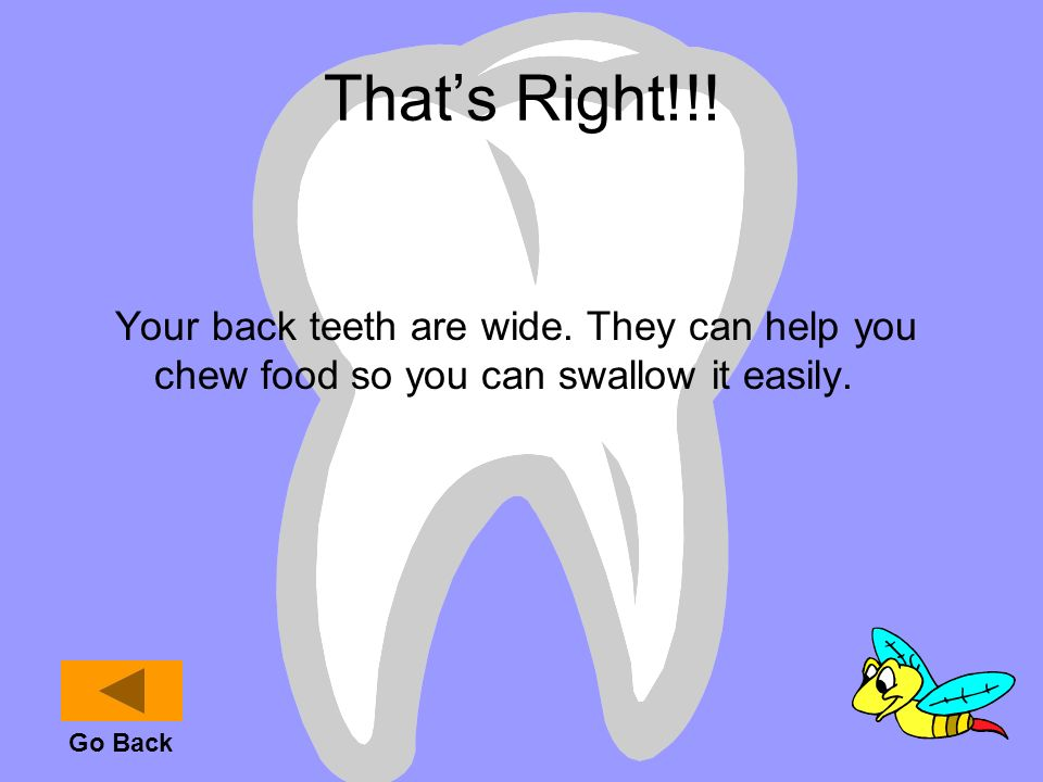 That's Right!!! Your back teeth are wide. They can help you chew food so you can swallow it easily.