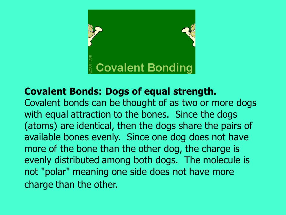 Covalent Bonds: Dogs of equal strength