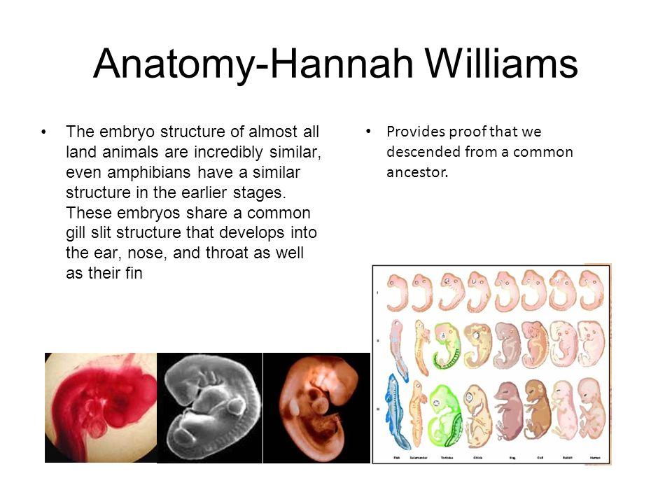 Anatomy-Hannah Williams