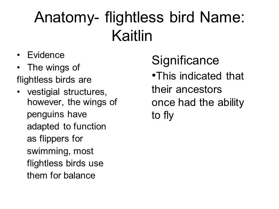 Anatomy- flightless bird Name: Kaitlin