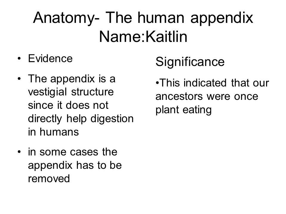 Anatomy- The human appendix Name:Kaitlin