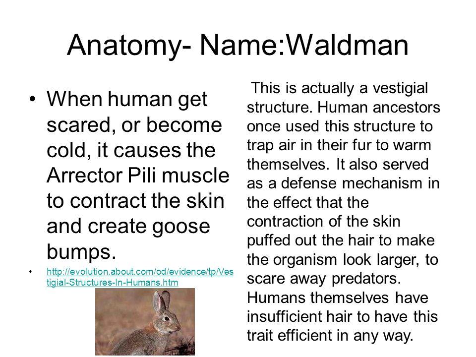 Anatomy- Name:Waldman