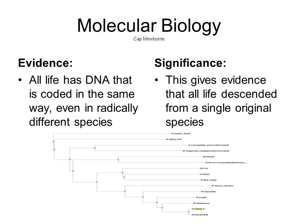 Molecular Biology Cap Mewborne