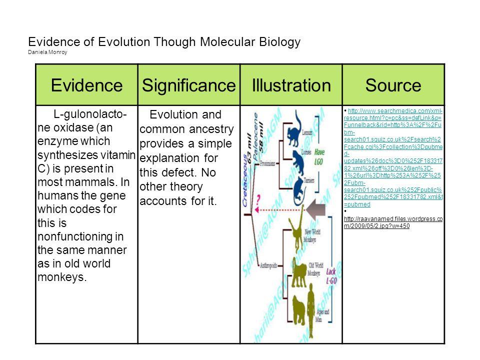 Evidence of Evolution Though Molecular Biology Daniela Monroy