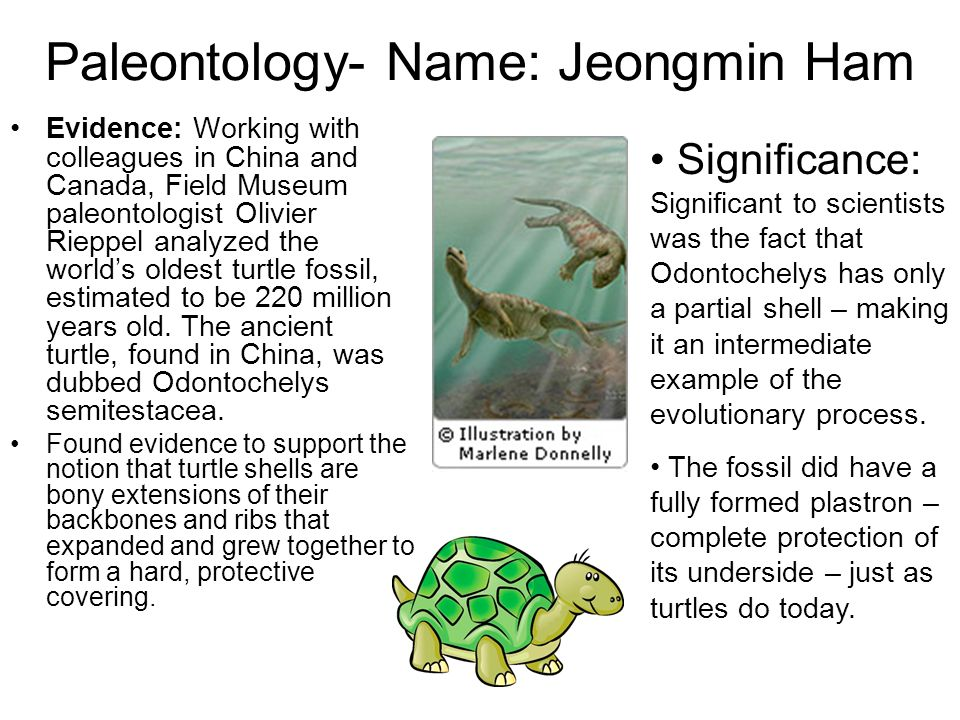 Paleontology- Name: Jeongmin Ham