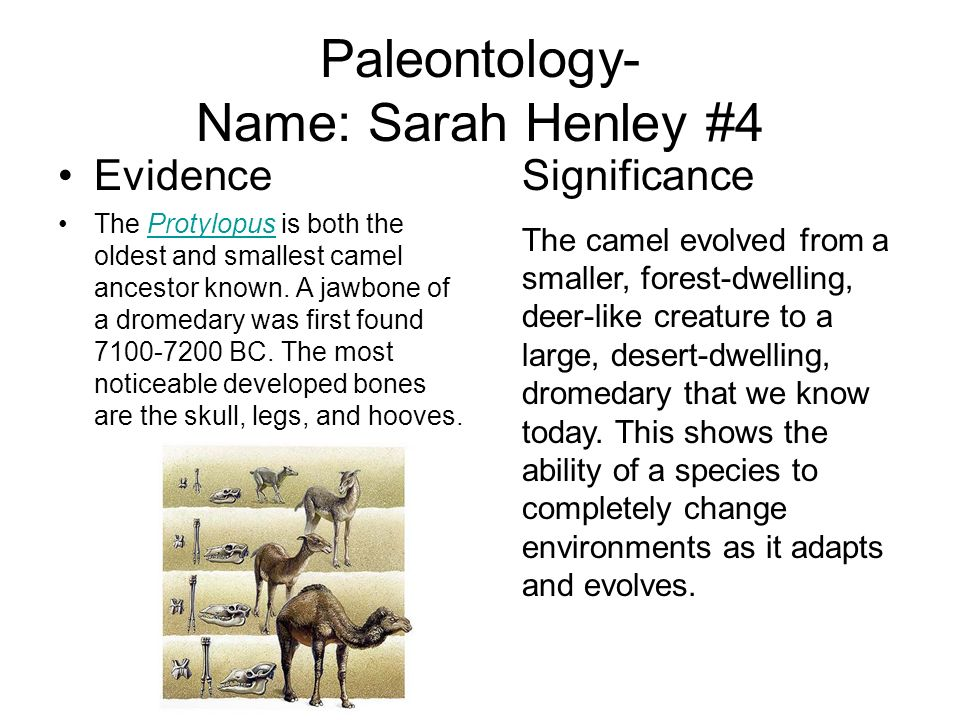 Paleontology- Name: Sarah Henley #4