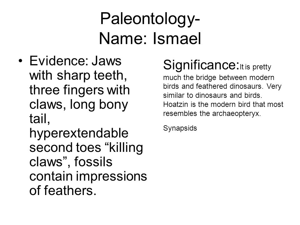 Paleontology- Name: Ismael
