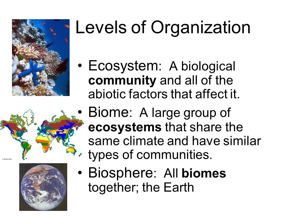 the relationship between climate and one or more biomes essay Tropical rainforest a biome with complex structure, warm weather, plentiful rainfall, and diverse species is a desert a biome characterized by hot days, cold nights, and cacti is the we will write a custom essay sample on chapter 45 and 46 test or any similar topic only for you order now taiga a forest found [.