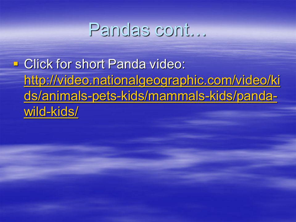 Pandas cont… Click for short Panda video: http://video.nationalgeographic.com/video/kids/animals-pets-kids/mammals-kids/panda-wild-kids/