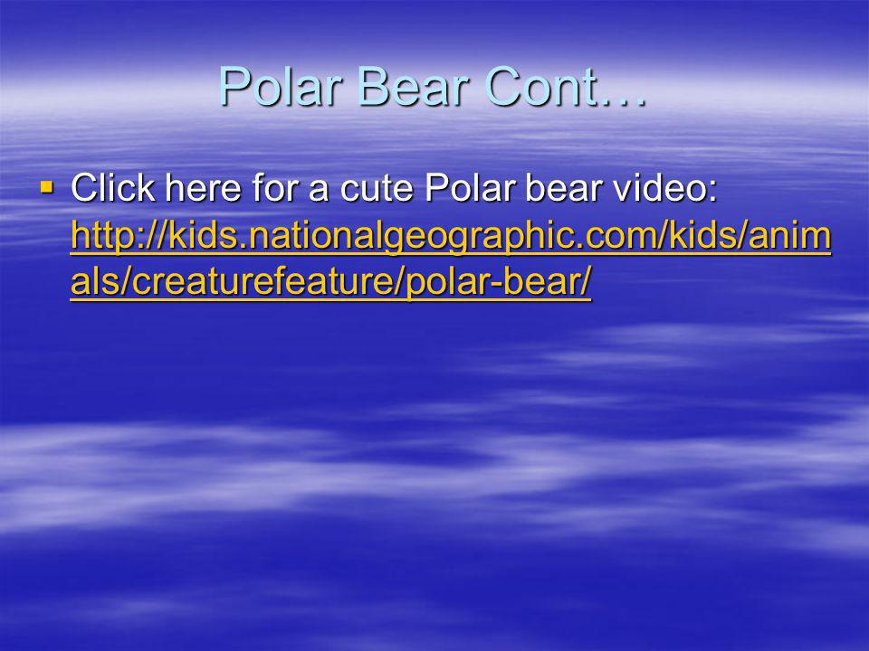 Polar Bear Cont… Click here for a cute Polar bear video: http://kids.nationalgeographic.com/kids/animals/creaturefeature/polar-bear/