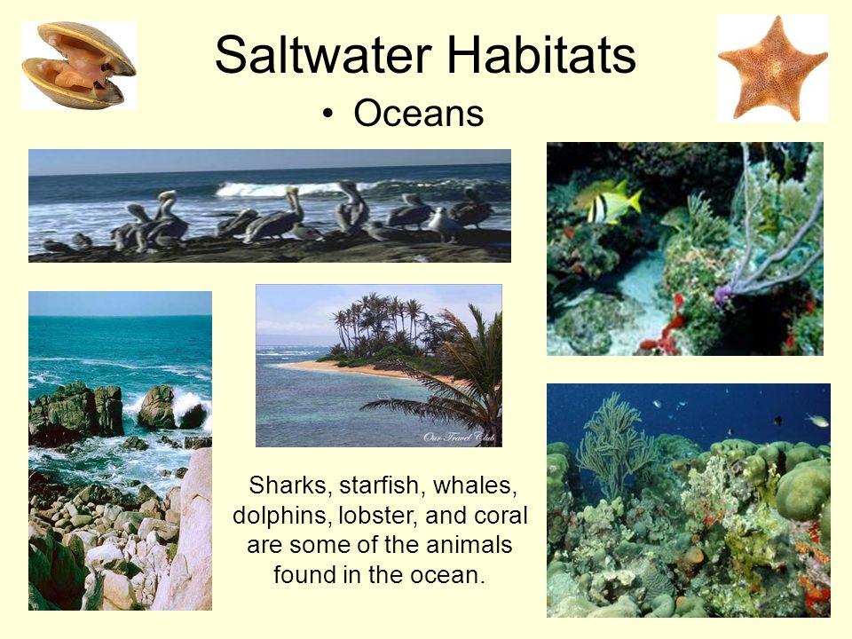 Saltwater Habitats Oceans