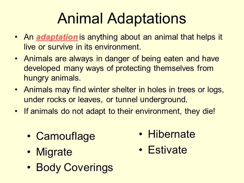 Animal Adaptations Hibernate Camouflage Estivate Migrate