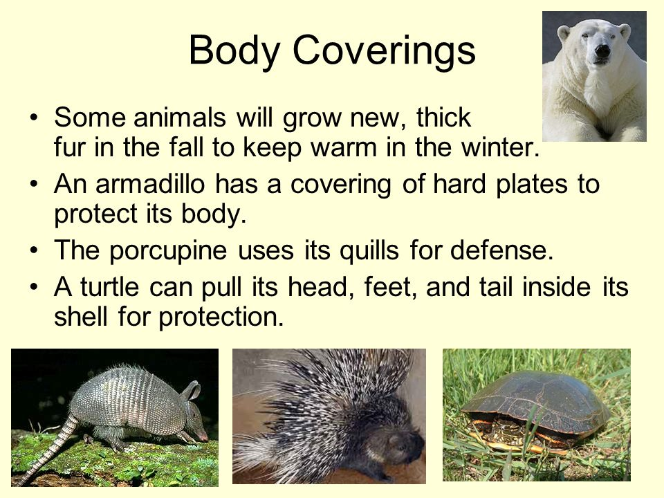 Body Coverings Some animals will grow new, thick fur in the fall to keep warm in the winter.