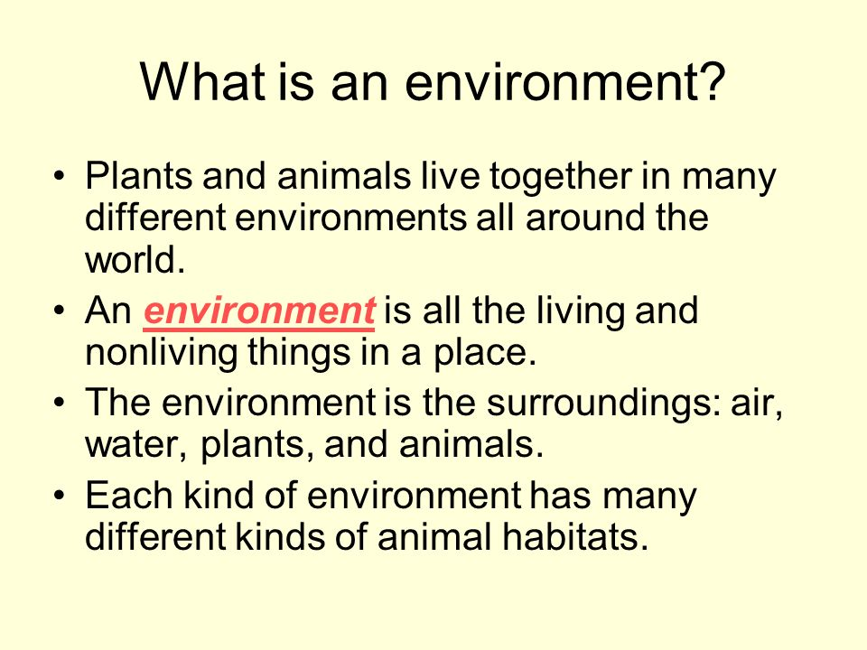 What is an environment Plants and animals live together in many different environments all around the world.