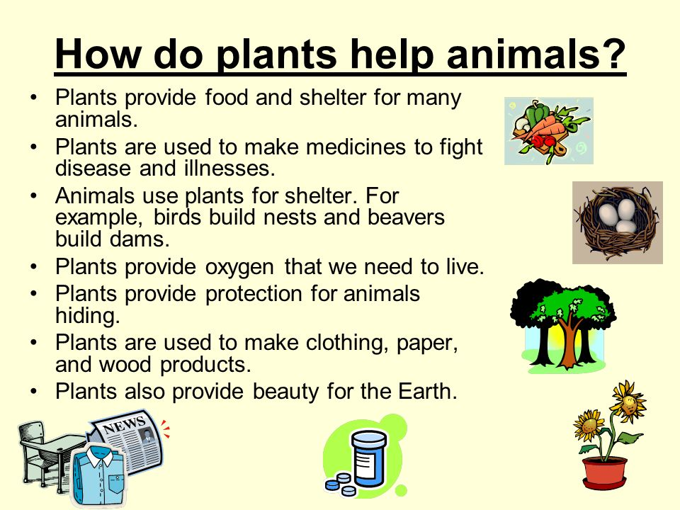 How do plants help animals