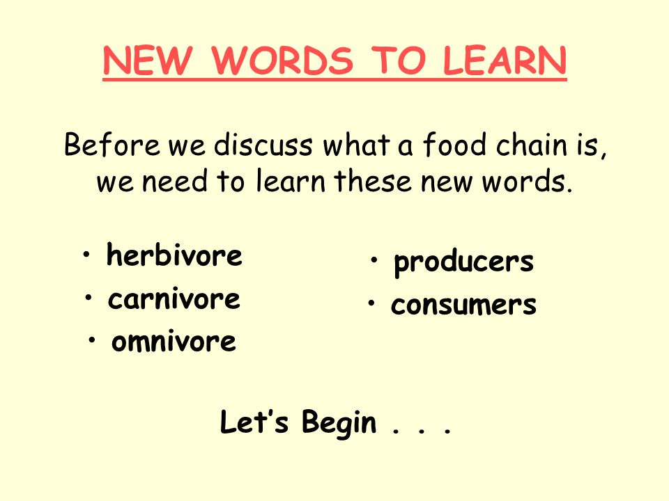 NEW WORDS TO LEARN Before we discuss what a food chain is, we need to learn these new words.