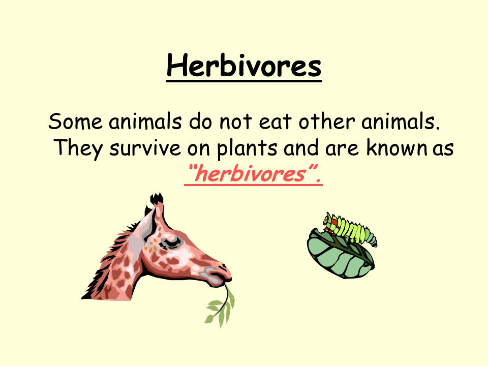 Herbivores Some animals do not eat other animals.