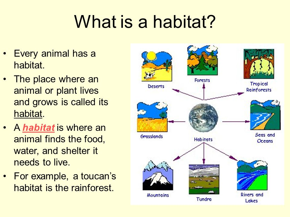 What is a habitat Every animal has a habitat.