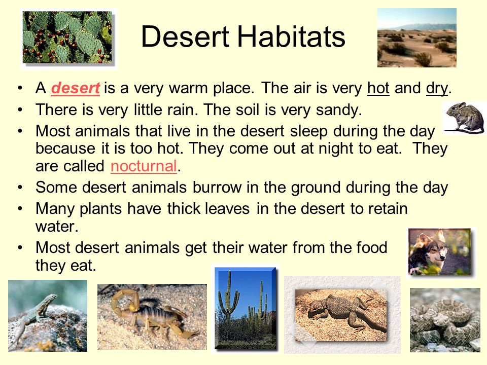 Desert Habitats A desert is a very warm place. The air is very hot and dry. There is very little rain. The soil is very sandy.