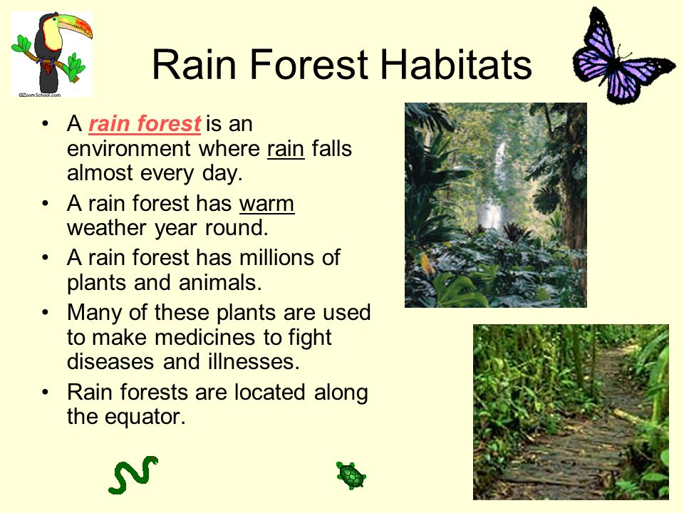 Rain Forest Habitats A rain forest is an environment where rain falls almost every day. A rain forest has warm weather year round.