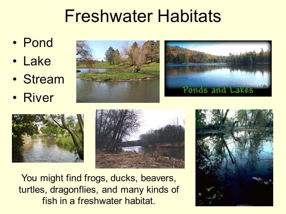 Freshwater Habitats Pond Lake Stream River