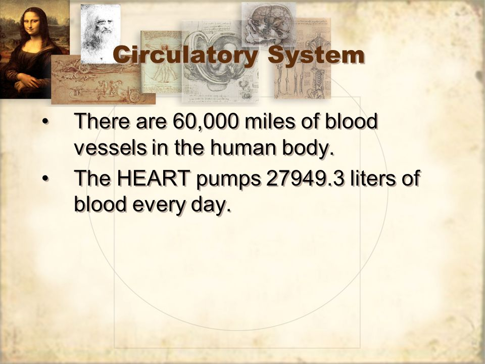 Circulatory System There are 60,000 miles of blood vessels in the human body.