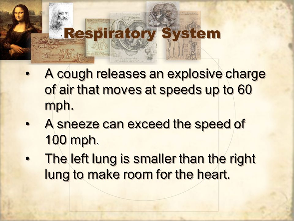 Respiratory System A cough releases an explosive charge of air that moves at speeds up to 60 mph. A sneeze can exceed the speed of 100 mph.