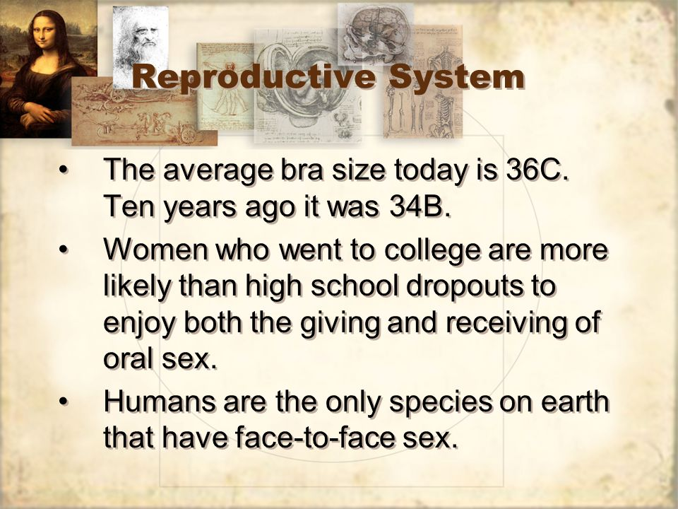 Reproductive System The average bra size today is 36C. Ten years ago it was 34B.