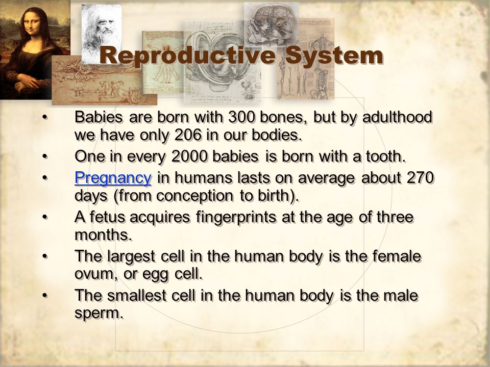 Reproductive System Babies are born with 300 bones, but by adulthood we have only 206 in our bodies.