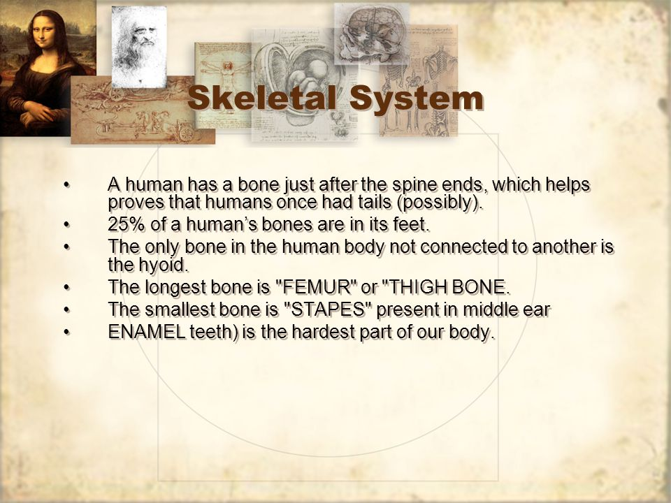 Skeletal System A human has a bone just after the spine ends, which helps proves that humans once had tails (possibly).