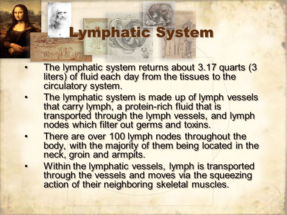 Lymphatic System The lymphatic system returns about 3.17 quarts (3 liters) of fluid each day from the tissues to the circulatory system.
