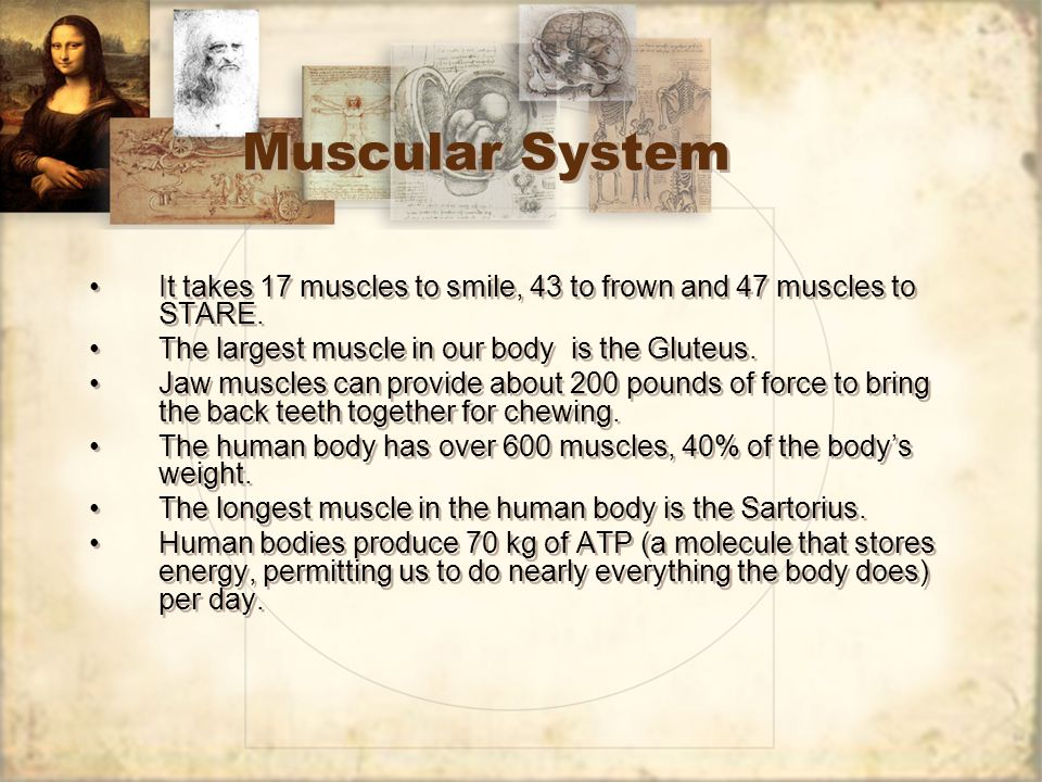 Muscular System It takes 17 muscles to smile, 43 to frown and 47 muscles to STARE. The largest muscle in our body is the Gluteus.