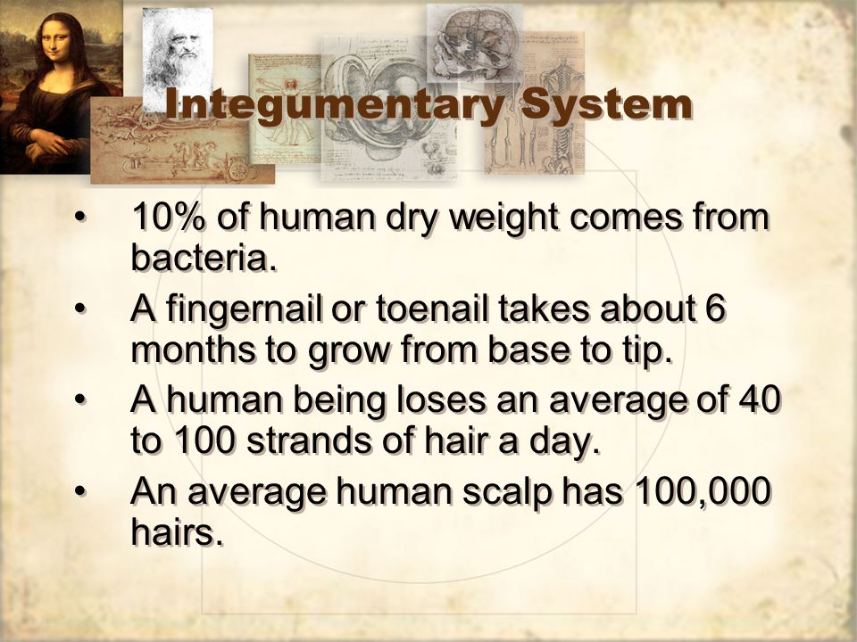 Integumentary System 10% of human dry weight comes from bacteria.