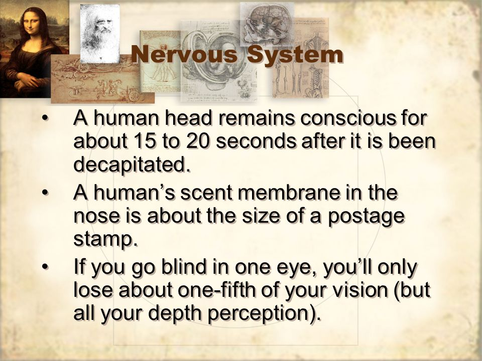 Nervous System A human head remains conscious for about 15 to 20 seconds after it is been decapitated.
