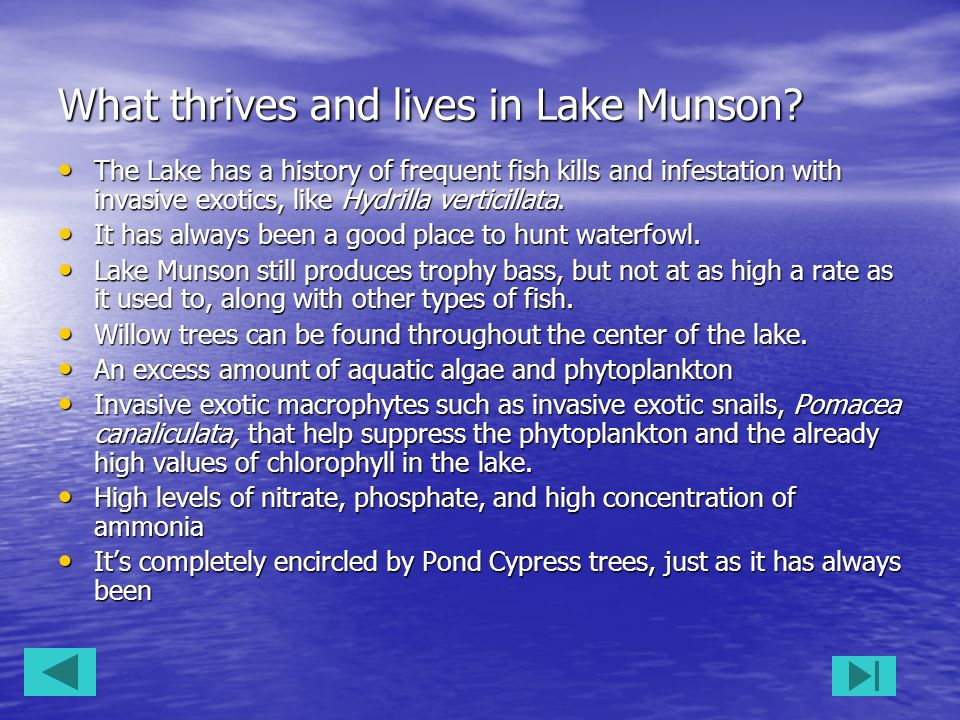 What thrives and lives in Lake Munson