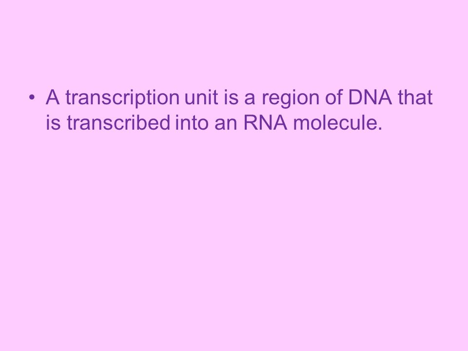 A transcription unit is a region of DNA that is transcribed into an RNA molecule.