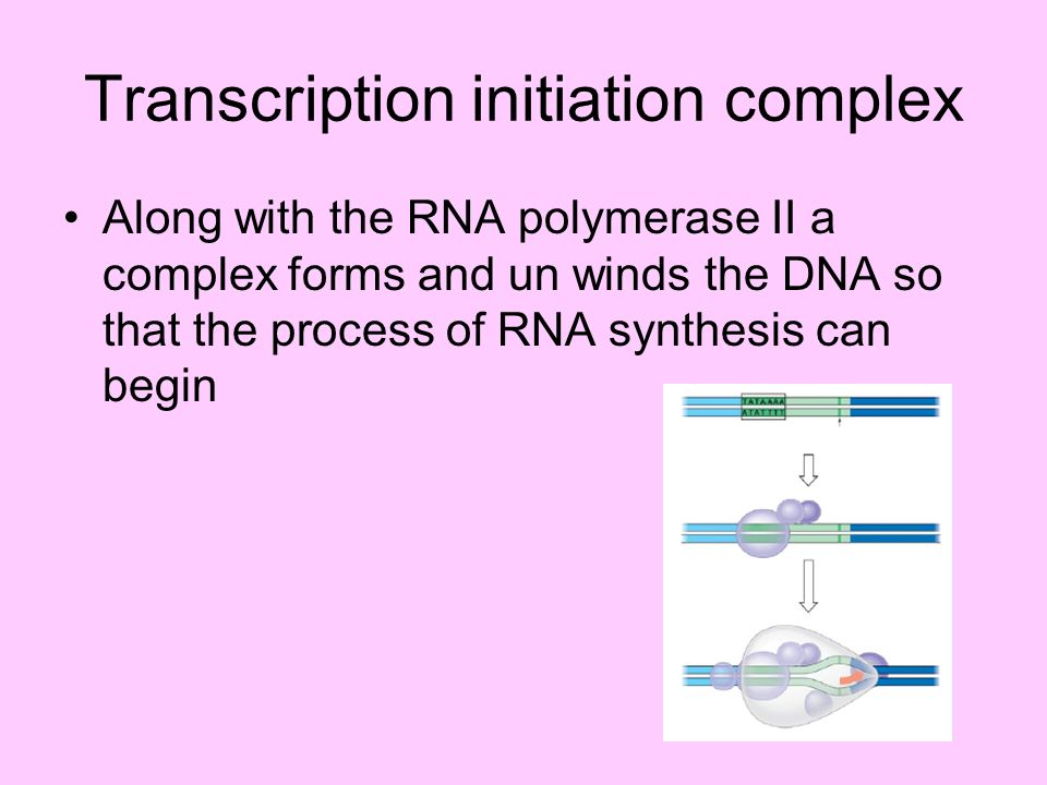 Transcription initiation complex