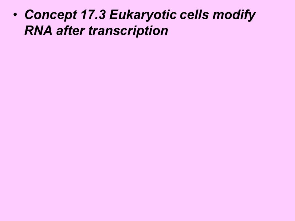 Concept 17.3 Eukaryotic cells modify RNA after transcription