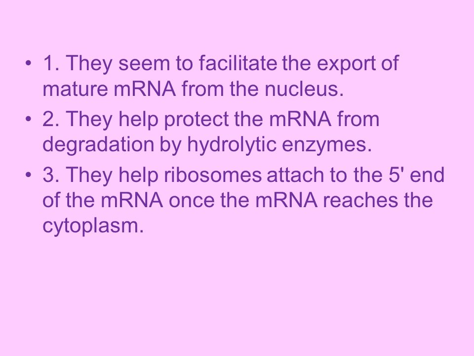1. They seem to facilitate the export of mature mRNA from the nucleus.