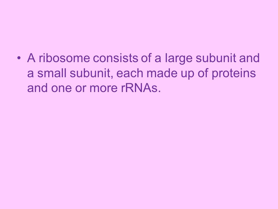 A ribosome consists of a large subunit and a small subunit, each made up of proteins and one or more rRNAs.